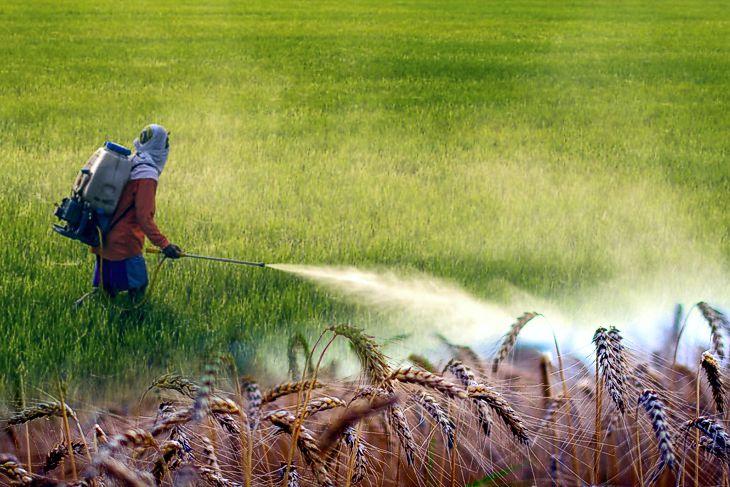 Fast jedes vierte Pestizid in EU per Ausnahmegenehmigung auf dem Markt – Hochgiftig und trotzdem zugelassen