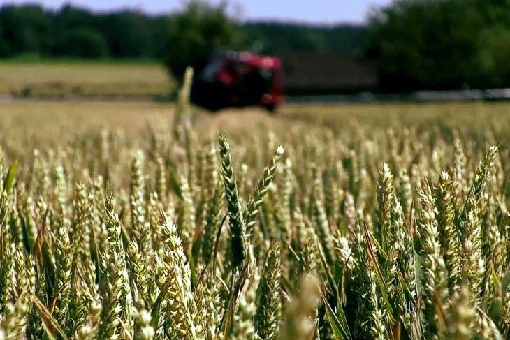 Urteil des Europäischen Gerichtshofs zur rechtlichen Einstufung von neuen Verfahren der Pflanzenzucht